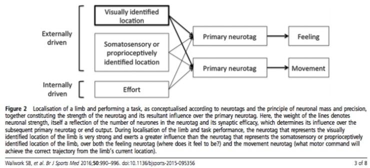 neurotags figura 2